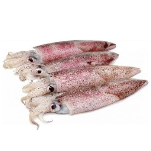 Calamari interi perù