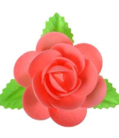 magnolia ostia fucsia