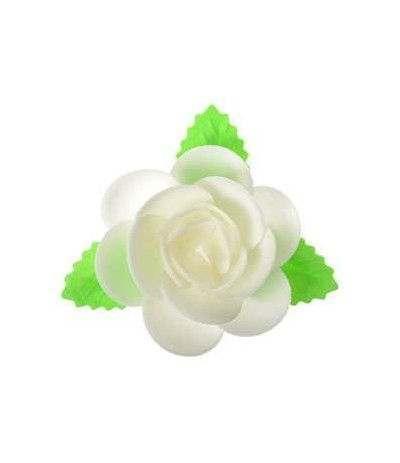 magnolia con foglie ostia bianca